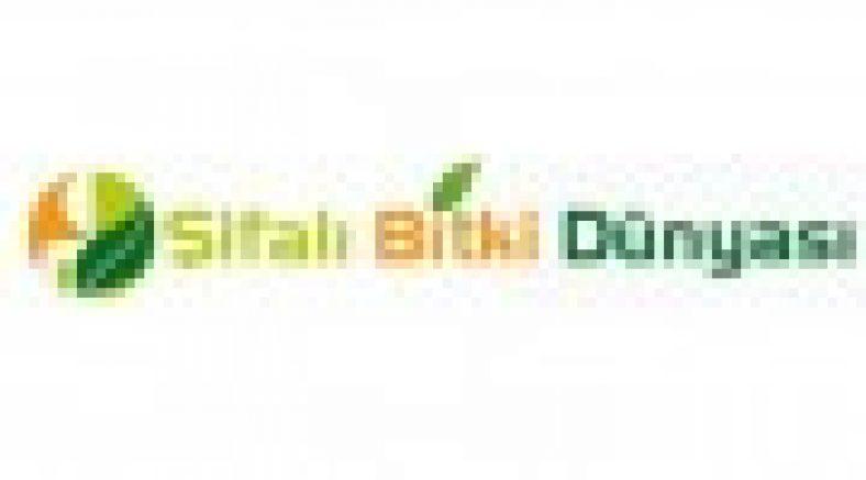 Sifalibitkidunyasi.com
